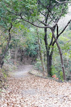 のいち冒険の森