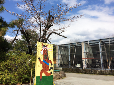 遊亀公園附属動物園 マレーグマ舎前 桜