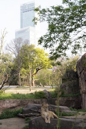天王寺動物園 サバンナゾーン