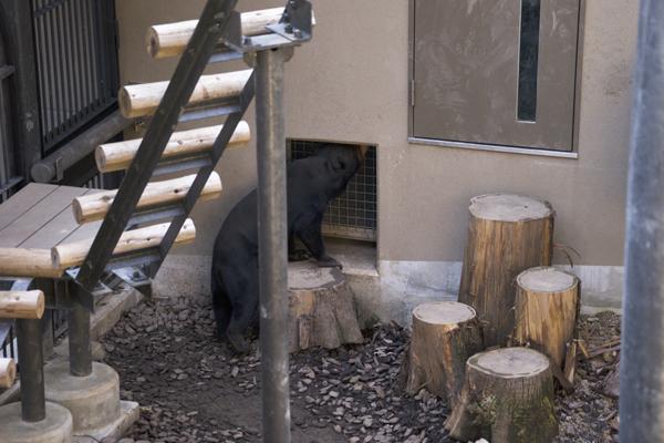 福岡市動物園 マレーグマ舎