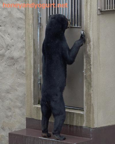福岡市動物園 旧マレーグマ舎 サニー