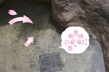 上野動物園 マレーグマ舎 プール