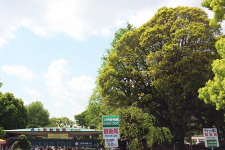 上野動物園 チケット購入行列