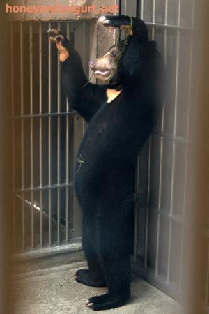 東山動物園 マレーグマ マーネ