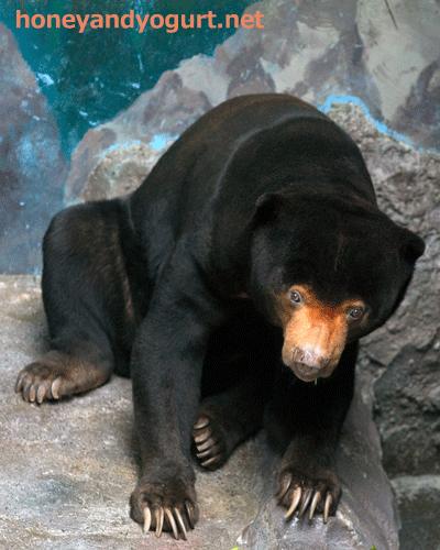 のいち動物公園 マレーグマ ワンピイ