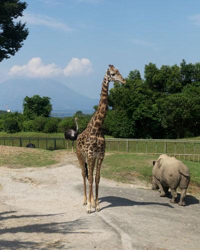 平川動物公園 サバンナゾーン