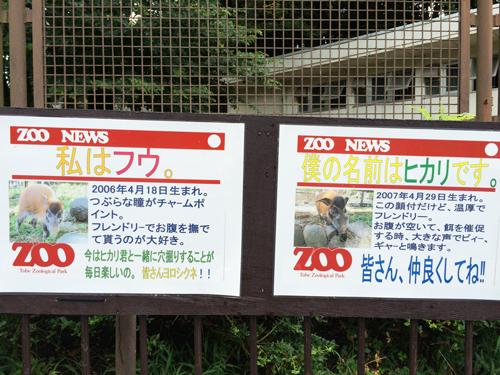 とべ動物園 アメリカストリート