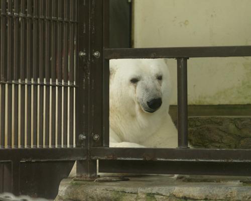 とべ動物園 ピース