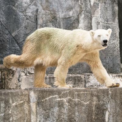 とべ動物園 バリーバさん