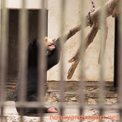 とべ動物園 マレーグマ ノア