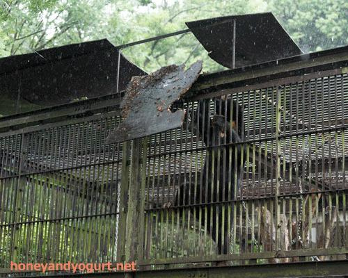 とべ動物園 マレーグマ シャイン