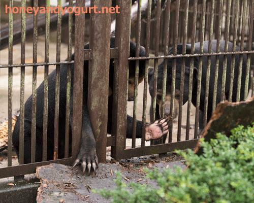 とべ動物園 マレーグマ シャイン ノア