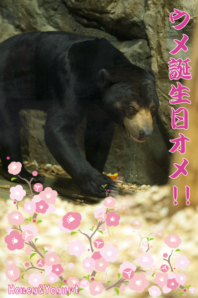 札幌市 円山動物園 マレーグマ ウメキチ