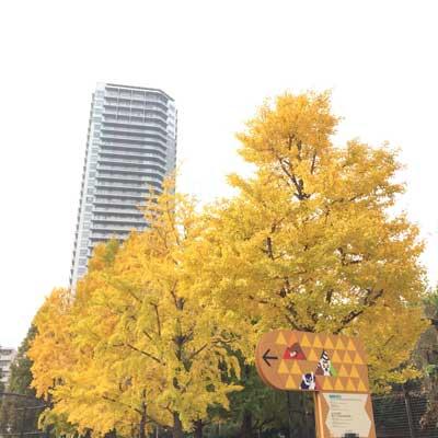 上野動物園 西園 イチョウ