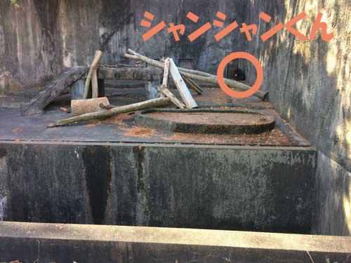 豊橋総合動植物公園 のんほいパーク マレーグマ シャンシャン