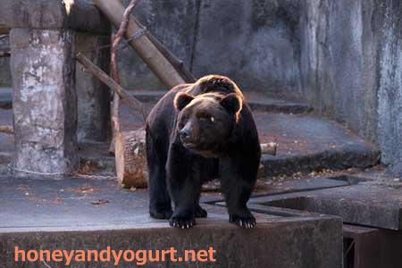 のんほいパーク クマ舎