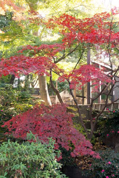 上野動物園 園内 紅葉