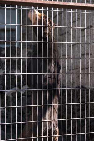甲府市 遊亀公園附属動物園