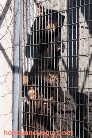 甲府市 遊亀公園附属動物園 マレーグマ サンディ サクラ