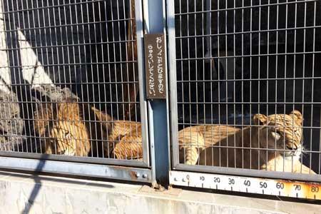 遊亀公園附属動物園 ライオン