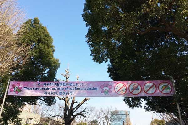 上野公園 花見バナー