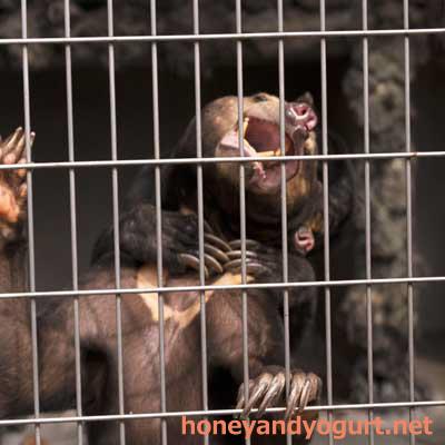 遊亀公園附属動物園 マレーグマ サクラ サンディ