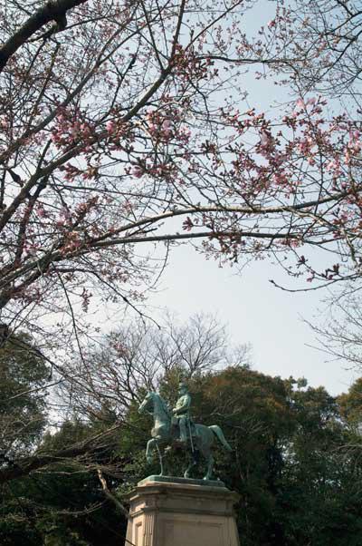 上野公園 コマツオトメ