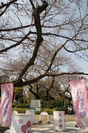 上野公園 お花見処