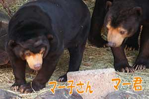 東山動物園 マレーグマ マー君 マー子