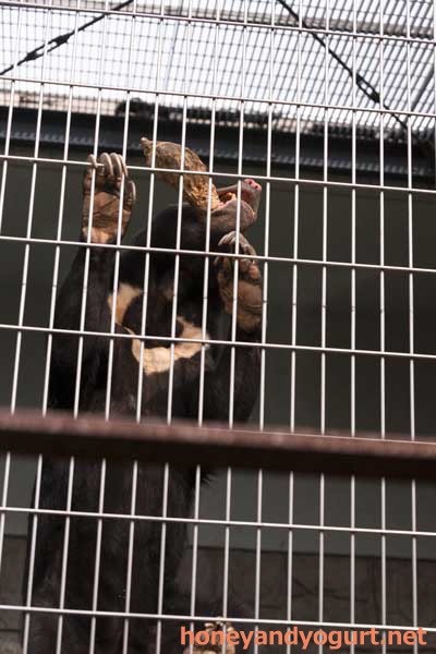 甲府市遊亀公園附属動物園 マレーグマ サクラ