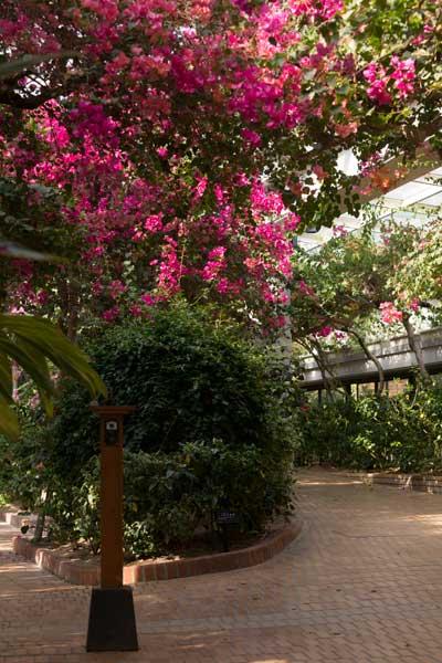 福岡市動植物園 植物園