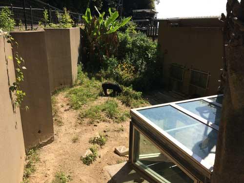 福岡市動植物園 マレーグマ舎