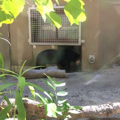 福岡市動植物園 マレーグマ マチ