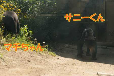 福岡市動植物園 マレーグマ サニー マチ