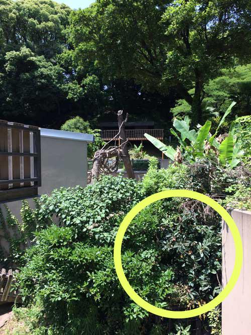 福岡市動物園 マレーグマ放飼場