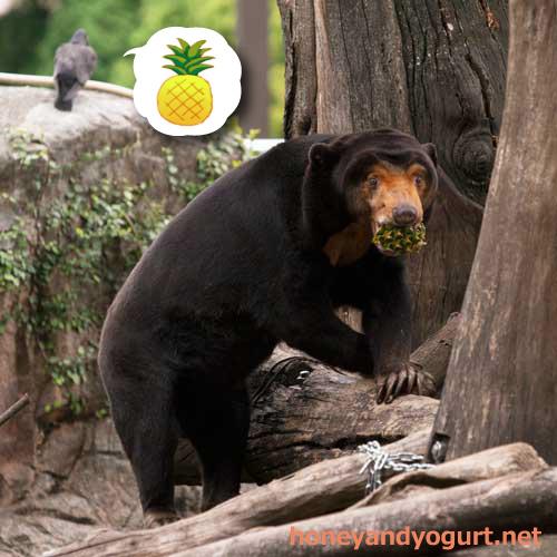 上野動物園 マレーグマ キョウコ 動物園