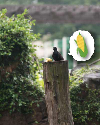 上野動物園 動物園 マレーグマ舎