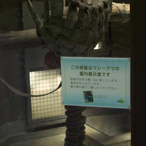福岡市動物園 マレーグマ 屋内展示室