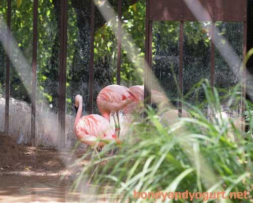 のいち動物公園 フラミンゴ舎