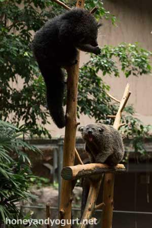 のいち動物公園 ジャングルミュージアム ケチャップ ポンズ