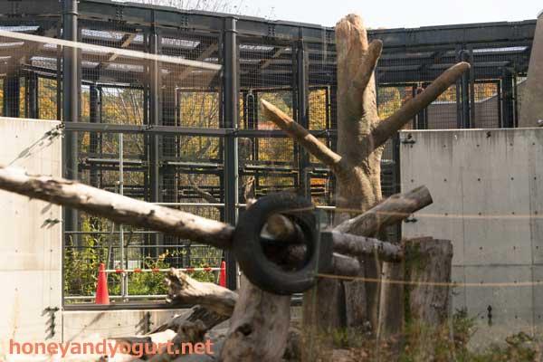円山動物園 マレーグマ舎