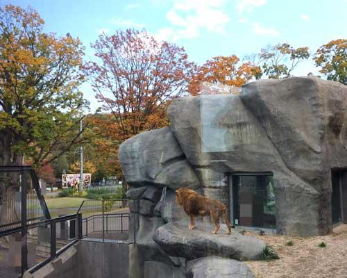 円山動物園 アフリカゾーン ライオン舎