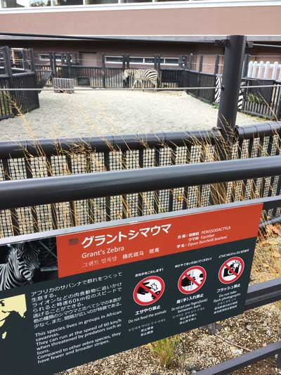 円山動物園 アフリカゾーン シマウマ舎