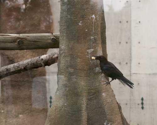 円山動物園 アジアゾーン マレーグマ舎