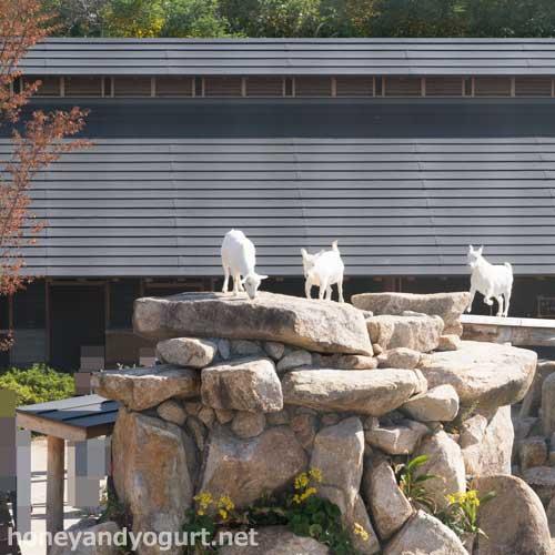 徳山動物園 るんちゃるんちゃ