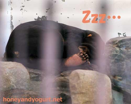 徳山動物園 マレーグマ ツヨシ