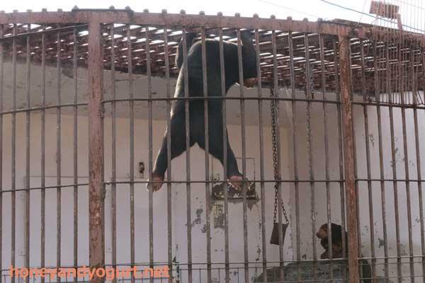 徳山動物園 マレーグマ マーヤ ツヨシ