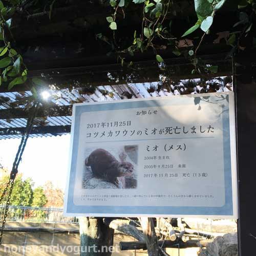 上野動物園 マレーグマ舎