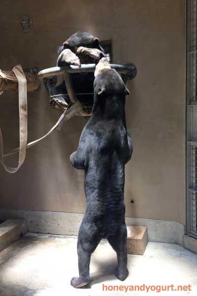 福岡市動物園 マレーグマ サニー マチ