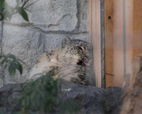 遊亀公園附属動物園 猛獣舎